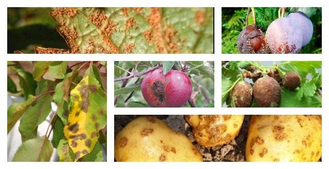 Зараженные растения
